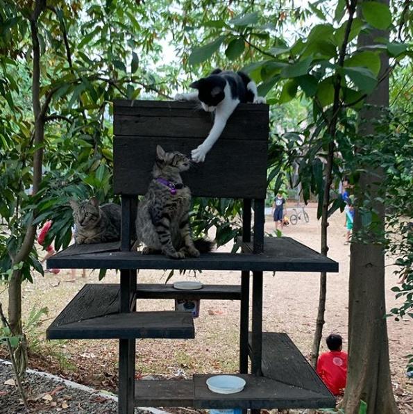 Kucing-kucing bermain di atas Rumah Kucing Garong