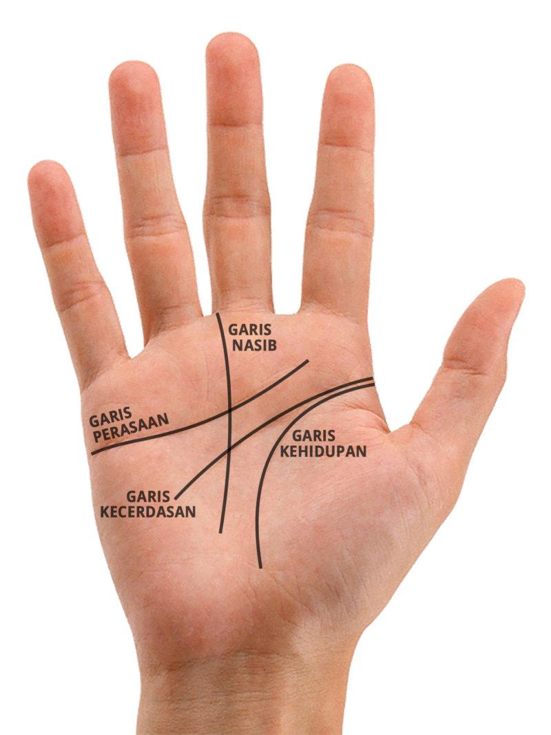 palmistry, 4 garis tangan