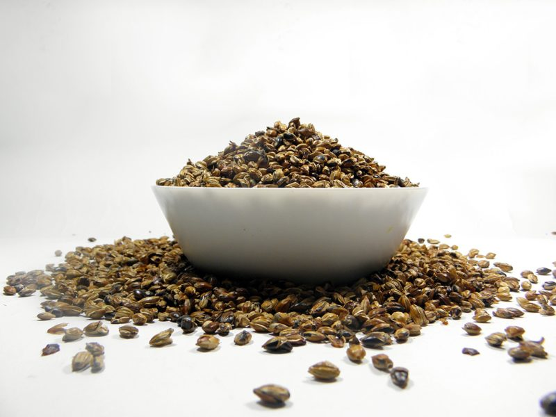 barley untuk Mugicha