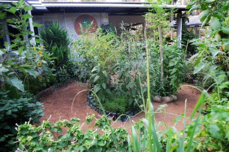 Kebun Kumara