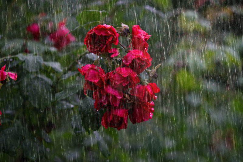 bunyi hujan